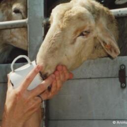 źródło: www.animals-angels.de